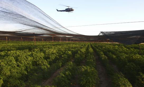 Hemp fields under police surveilance
