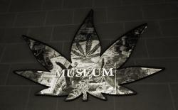 A hemp leaf shaped projection welcomes visitors